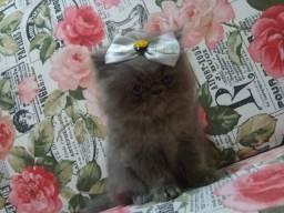 Bebê persa!!!
