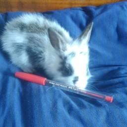 Mini coelhos malhadinhos - promoção