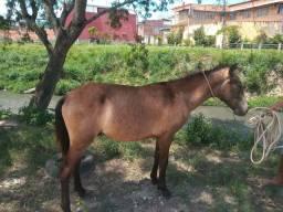Cavalo  com 10 meses ,Mestiço R$ 1,500