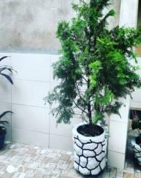 Vasos de cimento Plantados