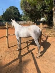 Cavalo - egua mansa pra qualquer pessoa