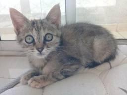 Doa se doação filhote gatinha