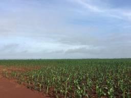 Fazenda 45 alqueires | planta 40| reserva foi substituída / Única no mercado!