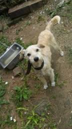 Doação de Cães!