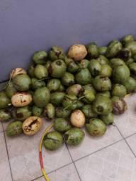 Cocô verde e cocô seco