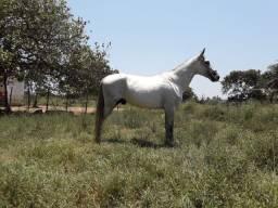 Cavalo MM registado