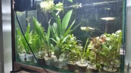 Plantas naturais para aquários e lagos