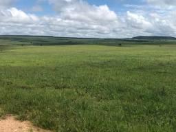 Fazenda de 457 hectares em Mato Grosso na região de Poxoréu