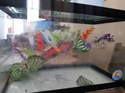 Aquaterrario pra tartaruga tigre d'água