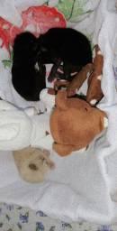 Estou doando estes três gatinhos órfãs.