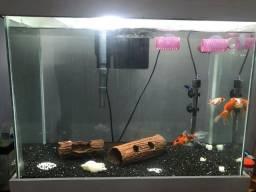 aquário com filtro e enfeites.