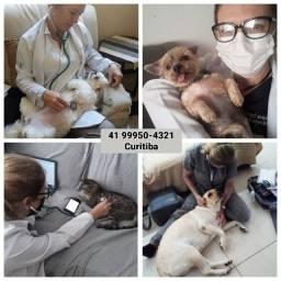 Veterinária em Casa - Cães e Gatos de Curitiba - *
