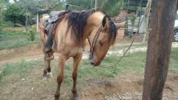 Cavalo campolino