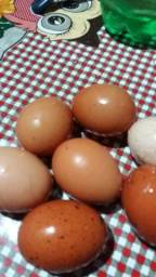 Vendo ovos caipira novíssimos direto da roça