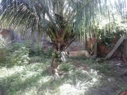 Vendo casa em vila mamoan 70.000