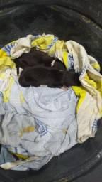 Doa- se filhote recém nascido