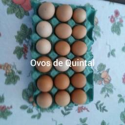 Ovos de Quintal