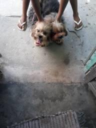 2 cachorros