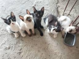 Doação de gatos Whatsapp *