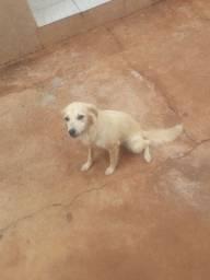 Doação de cachorrinha