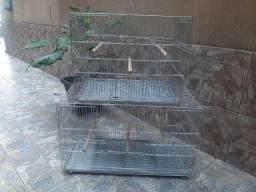 gaiola criadeira de trinca