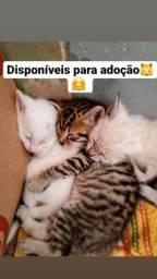 Filhote Gatinhos /DOAÇÃO