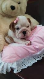 Bulldog Inglês filhote fêmea!Entregamos. Excelente pedigree.Microchip, NF Enxoval