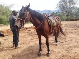 Cavalos baratos videio no watts 043984826954