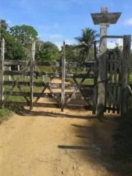 Vende-se Fazenda 30 Hectares (Ilhéus) Rio do Engenho