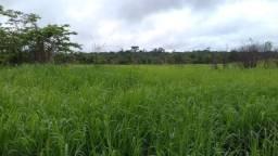 45 hectares a 45 km de Castanha no Estado do Pará por 160 mil reais