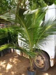Plantas em geral
