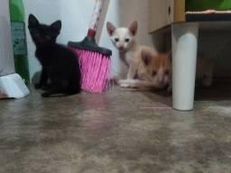Gatos macho para adoção