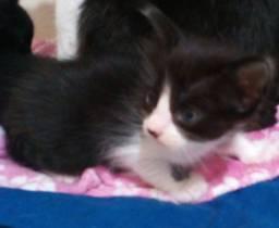 Estamos doando gatinhos