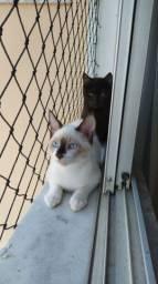 Gatos para adoção com castração garantida!