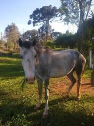 Vendo egua mansa de montaria