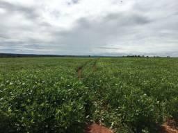 Fazenda 40 Alqueires | Pra Lavoura | 145 km Goiânia