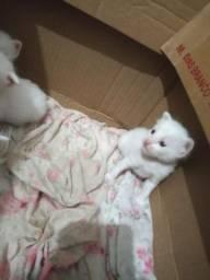 Filhotes de gato (DOAÇÕES)