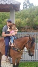Cavalo marchador!!