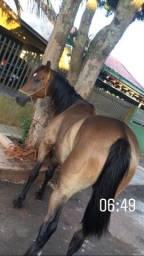 Vende cavalo quarto de milha