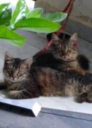 Lindos gatos pra adoção