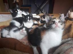Doa-se filhote de gatinho