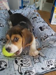 Beagle Loja Física