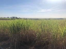 Fazenda para venda na região de Mirandopolis / Andradina-SP, com 118 alqueires sendo 94,5