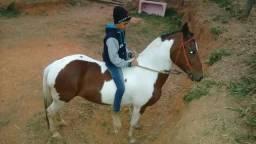 Égua pampa registrada