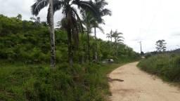 Sítio 70 hectares com 50 mil pés de Palmito Pupunha (Willian Ricardo)