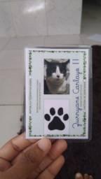 Indentidade para Pet ?