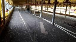 Vende se aviário pra tirar do local  ,aceitca trator ou caminhão, valor a combinar.