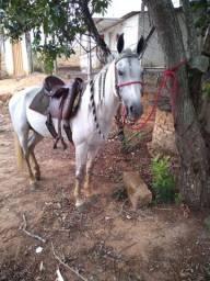 Vende cavalo
