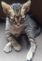gatinho pra doação