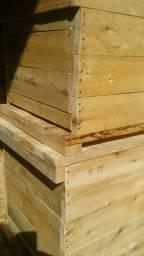 Super promoção caixas abelhas